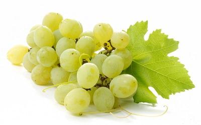 Yiannis International Corp  | Fresh fruit import & export